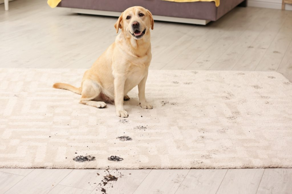 Best Rug Materials in a Home with Pets | Jack's Tile And Carpet